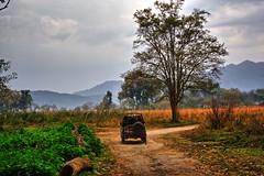 The Entrance to Paradise (Shot on Safari) Tags: corbett tiger reserve wildlife dhikala uttarakhand canon 350d india safari