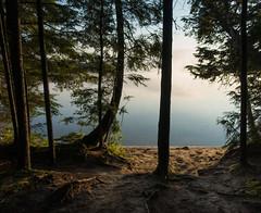 Morning Tranquility (Daren N.) Tags: sand beach tree forest lake mist morning sun sunrise algonquin park water fog