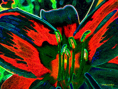 Colorful Daylily (Stephenie DeKouadio) Tags: canon painting art artistic daylily flower plant macro color colour colorful abstract abstractart