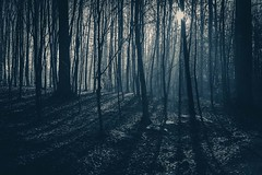 Spooky (Lee Glasby) Tags: places belgium nature tervuren woods