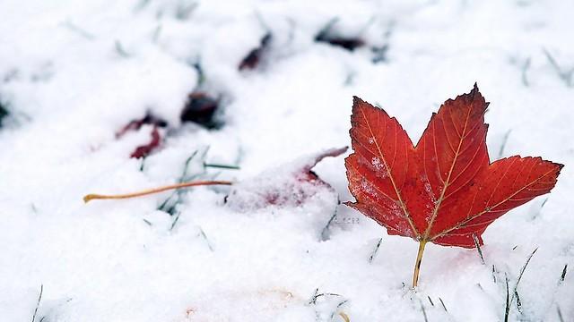 Кконцу недели вСамаре потеплеет ипройдет снег