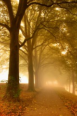Early in the morning (marielledevalk) Tags: mist trees tree road leaves leaf fall autumn season yellow orange light morning