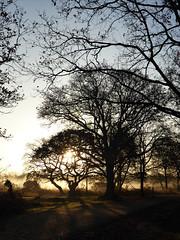 Towards the Sun (Gilder Kate) Tags: wimbledoncommon wimbledon london sw19 morningmist intothesun november mist sun panasoniclumixdmctz70 panasoniclumix panasonic lumix dmctz70 tz70 silhouette