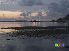 Seagras meadows at Changi (wildsingapore) Tags: changi carpark1 island singapore marine coastal intertidal shore seashore marinelife nature wildlife underwater wildsingapore seagrasses