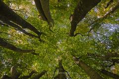 _DSC7489 (stefano.paglialunga1) Tags: provinciamacerata faggeta canfaito nikond7000 natura nikon bosco allaperto autunno foglie fogliedautunno