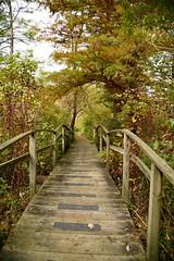 JJN_3305 (James J. Novotny) Tags: chicago conservatory botanical gardens garden flowers flower nikon d750 path paths skokie lagoons