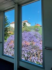 Framed perfectly - 25/10/16 (Visualise it) Tags: hospital rbwh australia queensland brisbane jacarandatree building scenery framed 366