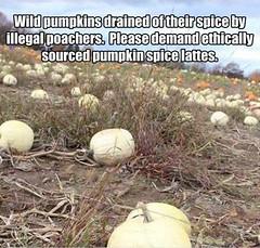 Make Sure You Pumpkin Spice Latte is Fall Trade (Chikkenburger) Tags: memebase memes art trolling pranks tricks lies aot internet troll cheezburger chikkenburger