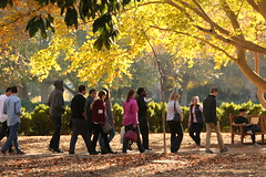 Walking backward isn't as easy as it appears (William & Mary Photos) Tags: williamandmary wm williammary collegeofwilliamandmary collegeofwilliammary grounds scenery fall