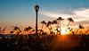 Sunflowers at Sundown | New York, New York (Stefan Hueneke) Tags: stefan hueneke sunflowers sunset sundown sky south cove new york jersey manhattan battery park boardwalk light streetlight lamppost autumn herbst fall lens flare film grain canon t5i 2470mm silhouette