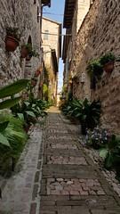 Spello Umbria Italy (Geoff Fagan) Tags: spello umbria italy steep plants building architecture travel town