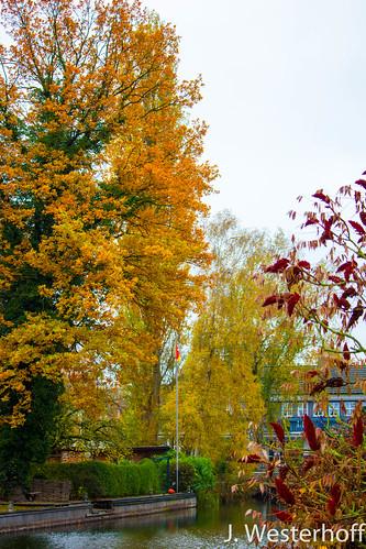 Herbst in den Grachten des Steinhuder Meers