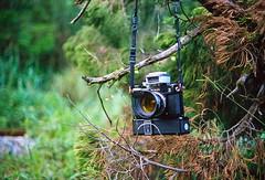 Nikon S3 Year 2000 Limited in  (Taiwan's Riccardo) Tags: 2016 taiwan color 135film fujifilmrdpiii transparency plustek8200i rangefinder leicam5 fixed minoltalens rokkorm 40mmf2    camera