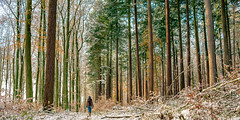 Strolling in the woods at the beginning of winter. (stray_light_rays) Tags: winter snow woods forest forestphotography forests grove walking onepersononly loneliness outdoors nature sunset path road forestpath trees seasons scene scenics scenery panorama