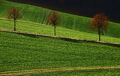 Favorite Place (Lutz Koch) Tags: idstein taunus landschaft landscape green elkaypics lutzkoch walk dogwalk trio