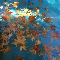 پژمرده ز بيداد جهان... (mahisiah) Tags: ايران تهران اب برگ پاييز موزه موزهزمان water orange leaves fall iran tehran timemuseum