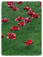 Poppies (Explore) (kat-12) Tags: galaxy