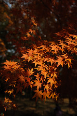 20161204-DS7_6542.jpg (d3_plus) Tags:  a05 wideangle d700 thesedays  architecturalstructure   kanagawapref   sky park autumnfoliage  japan   autumn superwideangle dailyphoto nikon tamronspaf1735mmf284dild  street daily  architectural  fall tamronspaf1735mmf284dildaspherical touring streetphoto  nikond700 tamronspaf1735mmf284 scenery building nature   tamron1735   tamronspaf1735mmf284dildasphericalif   autumnleaves