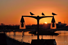 Southport Seagulls At Sunset (Jason Connolly) Tags: seagull seagulls southport merseyside sunset england