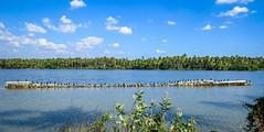 Darter parade (mohammedali47) Tags: paravurlake paravur darter blue parade nature water kerala kollam lakes