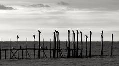 On Hold (martinasirena) Tags: jesolo beach seascapes seascape blackandwhite blackandwhitephotography seabirds silhouette sea sky bnwporn seagull pier waitingfor onhold nature italy italia veneto mare