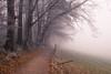 Foggy pathway (helena678) Tags: fog path trees meadow frost winter fence light rural landscape switzerland schweiz