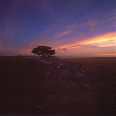 Ottenby in morning light (Theolde) Tags: hasselblad distagon440 film fuji velvia50
