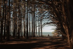 it's me by the sea (Andy Kennelly) Tags: trees ocean california coast me sp self portrait light shadows fence beach branches moss