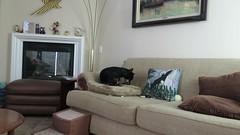 October 16, 2014 (1) (gaymay) Tags: california dog video palmsprings