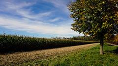 Fall in Germany (Trayay) Tags: autumn sky tree fall clouds landscape bayern bavaria corn herbst himmel sunny mais sonnig landschaft baum woken