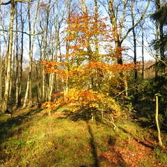 Wanderwochenende in der Rhn - Hikingweekend (Ellen Ribbe) Tags: flowers autumn fall leaves landscape hiking herbst blumen landschaft bltter wandern tautropfen rhn