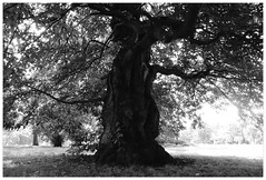 # (Silvia greco) Tags: life trees england blackandwhite streets london clouds towerbridge portraits living missing remember view bigben divina followme lovelondon theshard