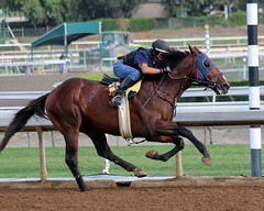Leaning Into It (kimpossible pics) Tags: horse racetrack jockey horseracing racehorse thoroughbred arcadia equine santaanita santaanitaracetrack workouts exerciserider morningworkouts neildrysdale