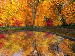 Fall at Angel Manor 2014 (Sparkie Cyberstar) Tags: autumn fall angel raw secondlife virtual manor untouched windlight virtualworld scyberstar sparkiecyberstar