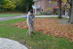 There are plenty of leaves to be raked
