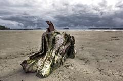 Stormy Beach (Frank McNamara) Tags: canada beach stormy driftwood droh