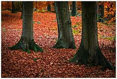 5D-8691-Auto (ac | photo) Tags: autumn trees light fall nature colors leaves landscape fallcolors