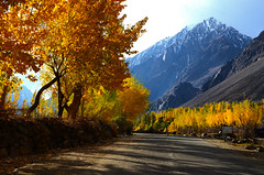 When leaves turn flowers...! (NotMicroButSoft (Fallen in Love with Ghizar, GB)) Tags: autumn water river lakes ghizar phandar gupis khalti gilgitbaltistan