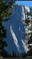 El Capitan -Yosemite National Park (Contrails) Tags: california trees usa mountains nature sunshine landscape nationalpark nps sierra yosemite wilderness elcapitan sierranevada yosemitevalley elcap rockformation granitemonolith rangeoflight