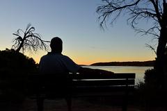 Best seat in the house (jarrado) Tags: sunset birds nikon birdwatching shilouette d7000