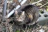 Cat on wasteland (Moldovia) Tags: pet animal cat feline tabby stare pointandshoot catalog pointshoot tabbycat catpix catspotting catmoments catnipaddicts catsunleashed fujifilmfinepixhs50exr