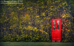 Red Door (sminky_pinky100 (In and Out)) Tags: door autumn red canada fall strange novascotia random reddoor foliage hedge colchestercounty omot cans2s