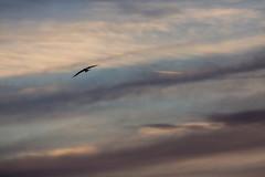 Dramatic bird