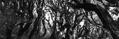 landscape_06 (mattseph) Tags: new trees bw white black clouds landscape bush moody atmosphere zealand nz taranaki forestimages