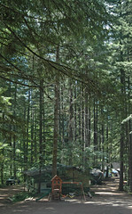 2014-07-04 Path by campsite 13.23.45 (bsnenninger) Tags: camping july 4thofjuly 2014 detroitlake northsantiamsportsmanclub