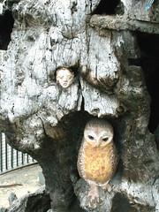 LONDON 1765 (RANCHO COCOA) Tags: wood uk england sculpture tree london garden elf owl trunk kensington carvings kensingtongarden sculpted elves elfinoak