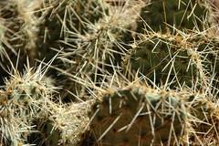 Cactus (EmperorNorton47) Tags: grandcanyonnationalpark northrim arizona photo digital afternoon autumn fall cactus opuntia worldheritagesite