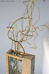 Saule pleureur - Chinese Willow (arnaud.munoz) Tags: plant composition plante vase dxo arbre salix saule pleureur babylonica saulepleureur salixbabylonica