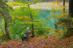 Autumn impressions (Alpsee, Bayern) (armxesde) Tags: autumn lake tree fall water germany bayern deutschland bavaria see soft colours pentax herbst ricoh baum k3 baviera alpsee