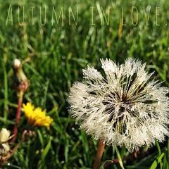 Autumn in love. #herbst2014 #herbst #autumn #sun #enjoy #hoorayfortoday #hooray #ignice #ignature #igtravel #natur #nature #travel #travelblog #travelingram #traveltheworld #worlderlust #magdeburg #dew #dandelion #dandelionclock
